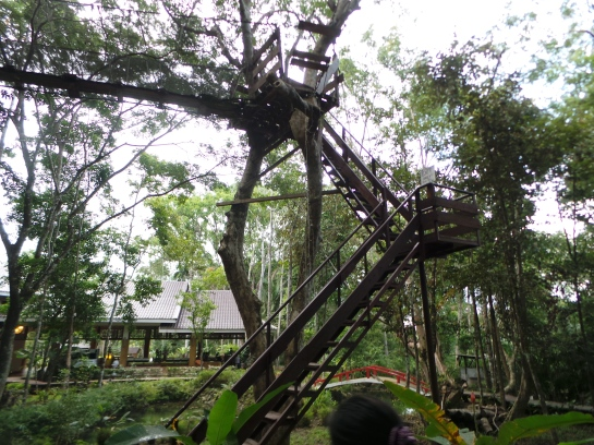 The Tree Top Rope Challenge or Snake Ladder