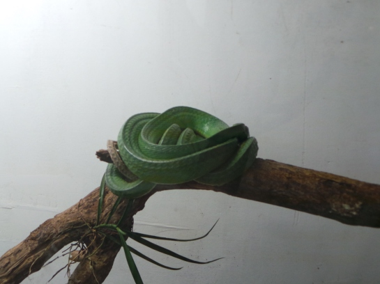 The Serpentarium displays a green snake