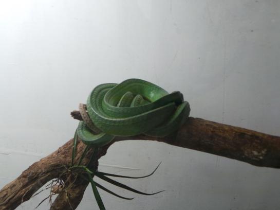 The Serpentarium displays a green snake