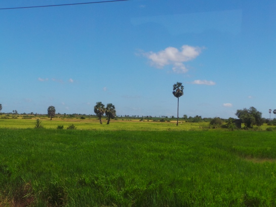 Rice field in Kampong Cham