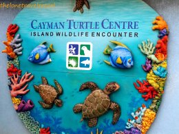 Explore Cayman by Land andSea